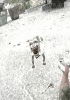 Stalker - Chernobyl Dog