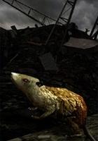 Stalker - Krysy