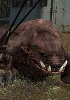Stalker - Boarc