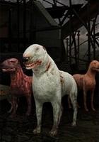 Stalker - Blind Dog